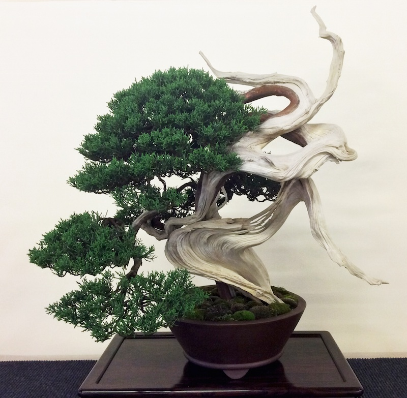 Bonsai in salzburg 2015 bonsai empire for Unusual bonsai creations