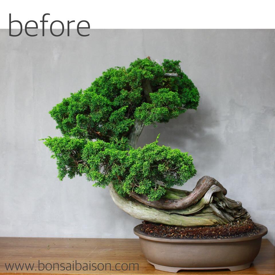 thanun-bonsai-before Wiring Bonsai on