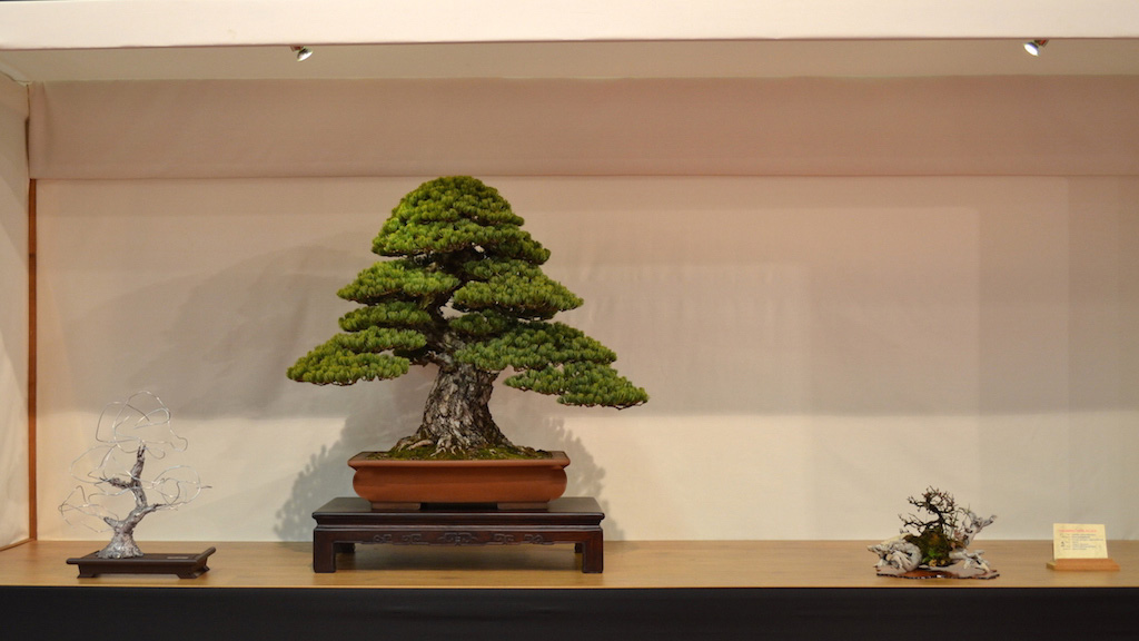 Noelanders winning Bonsai tree