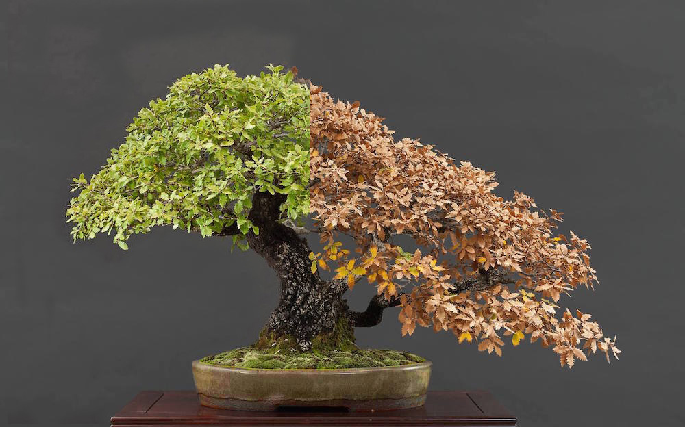 Choosing a Bonsai pot for your tree - Bonsai Empire
