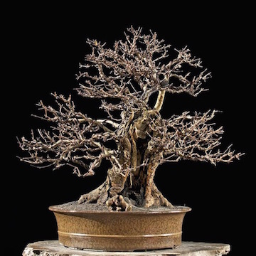 Bonsai by Walter Pall