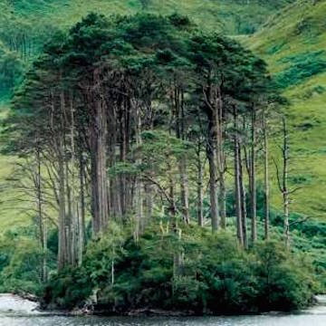 Island with pines (Scotland.gov)