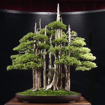 Bonsai forest by John Naka, Japan