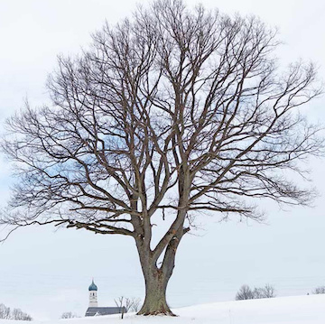 Tree in winter (Facebook Walter Pall)