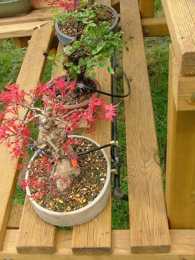 Automated bonsai watering