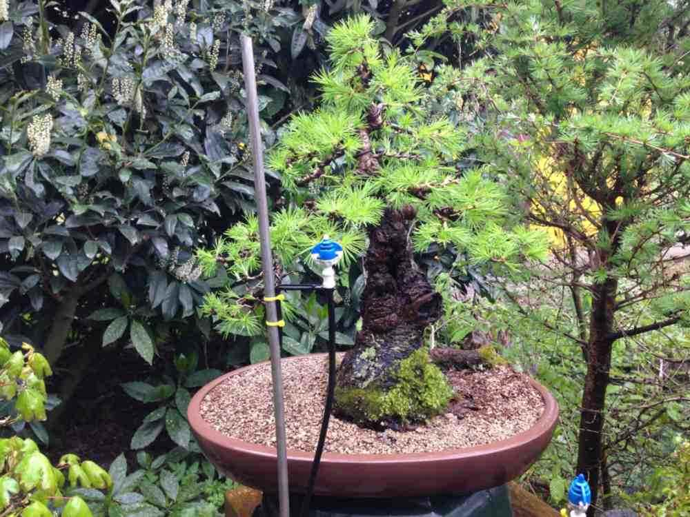 Automated Bonsai Watering Bonsai Empire