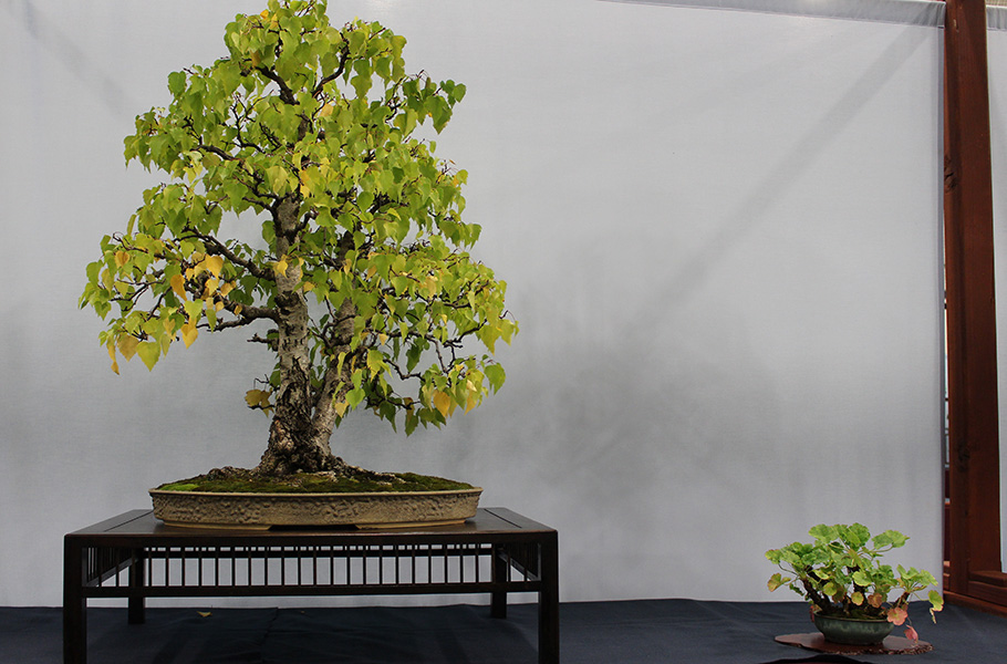Birch Bonsai Empire