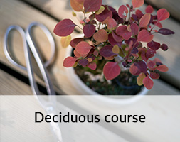Developing Deciduous Bonsai course