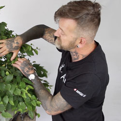 Harry Harrington, Bonsai teacher