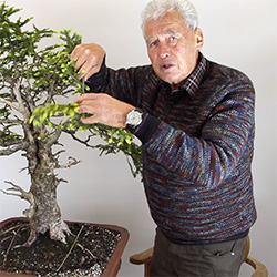 Walter Pall, Bonsai teacher