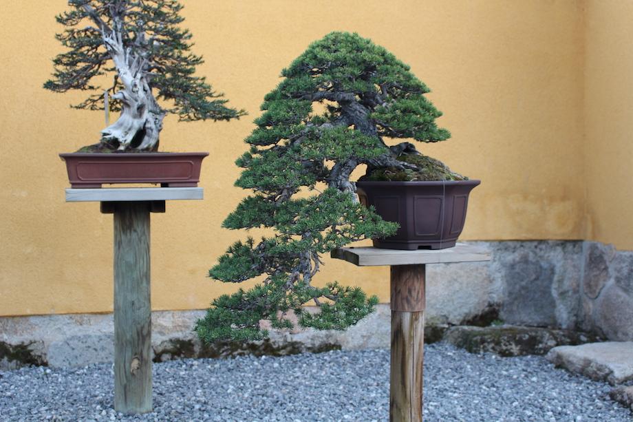 David benavente 39 s garden bonsai empire for Unusual bonsai creations