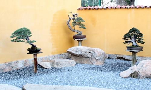 David Benavente's garden
