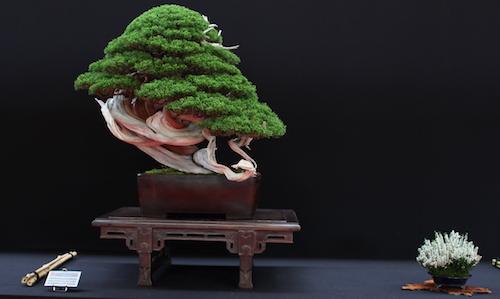European Bonsai San show 2017