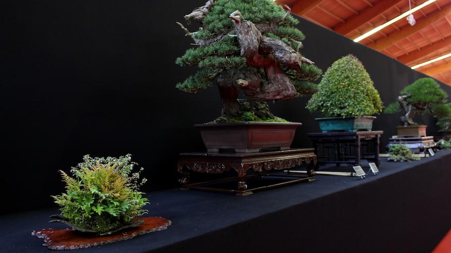 Bonsai san show 2017 bonsai empire for Unusual bonsai creations