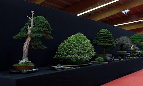 European Bonsai San show 2017