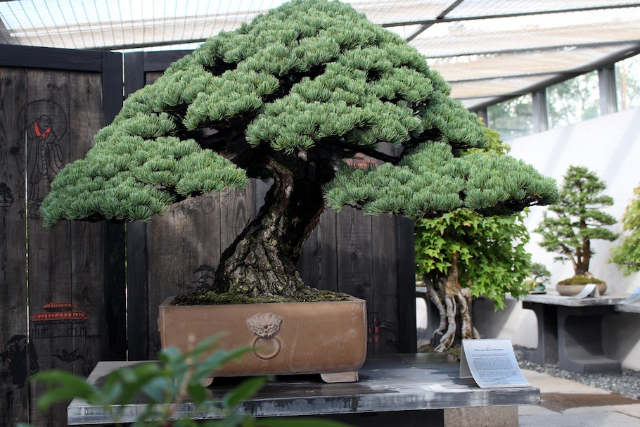 The crespi cup 2017 bonsai empire for Unusual bonsai creations