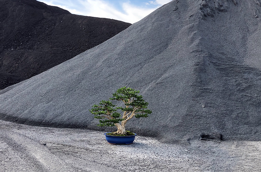 Display Bonsai trees in nature