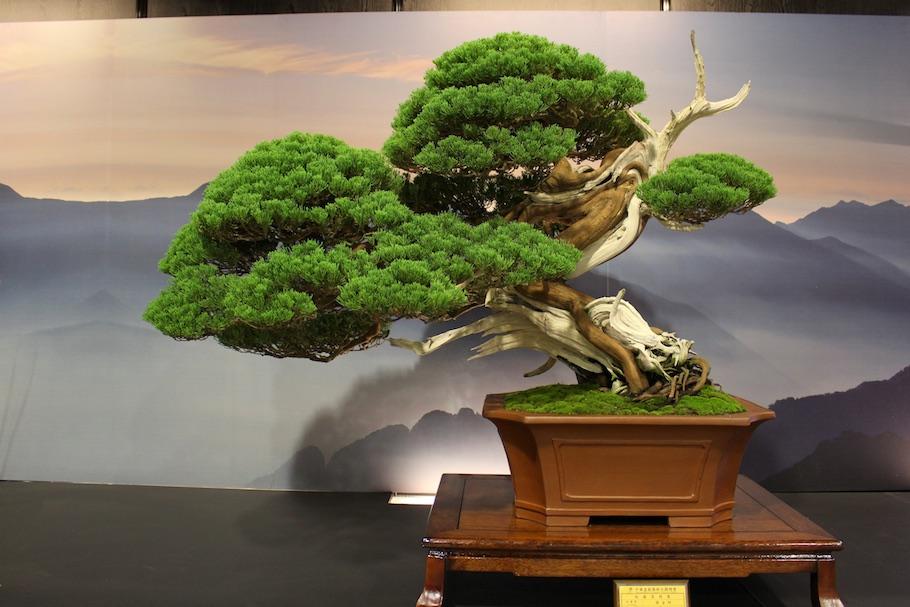 Hwa fong exhibition bonsai empire for Unusual bonsai creations