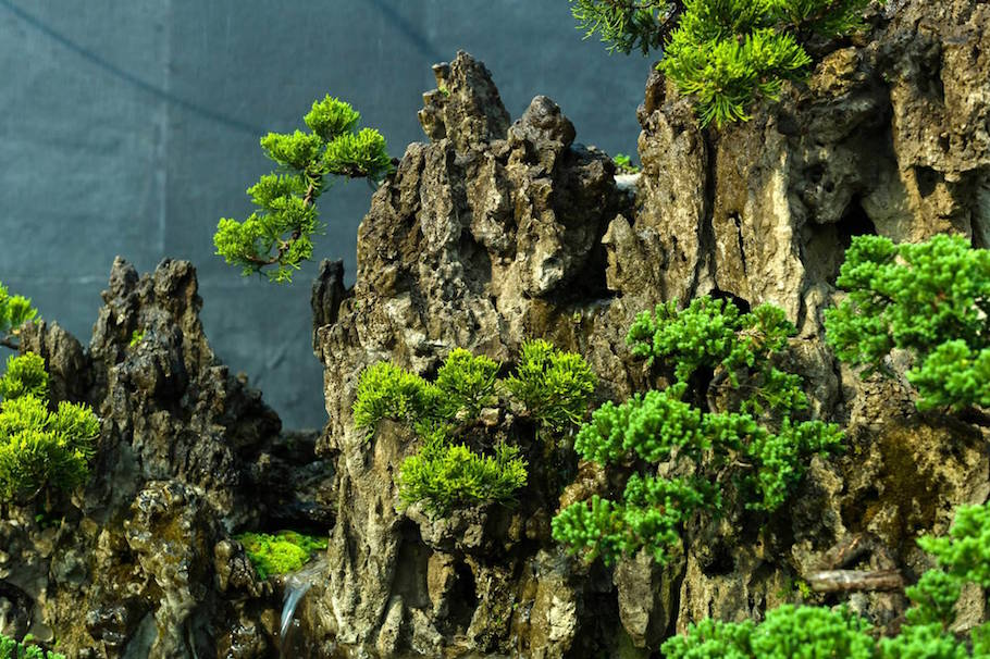 The Bonsai Landscape Bonsai Empire