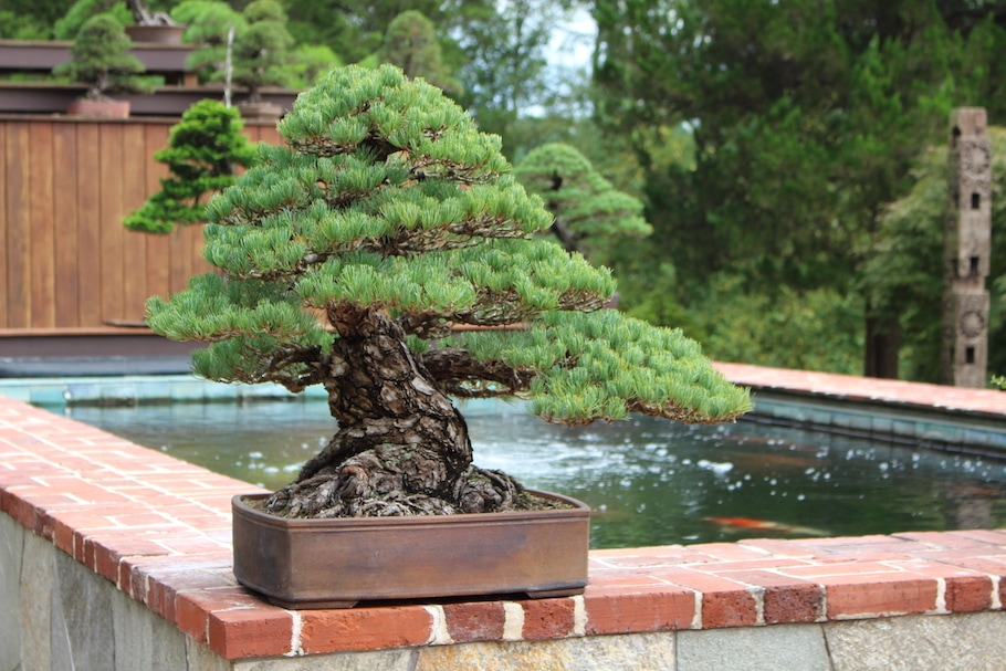 Kennett Bonsai collection