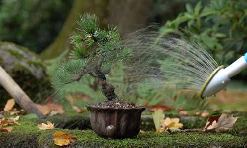 Creating a Pine Bonsai