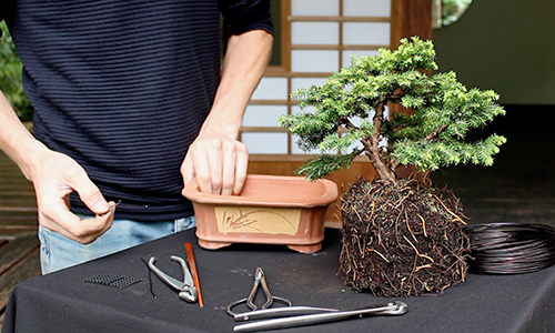 How to make a Bonsai