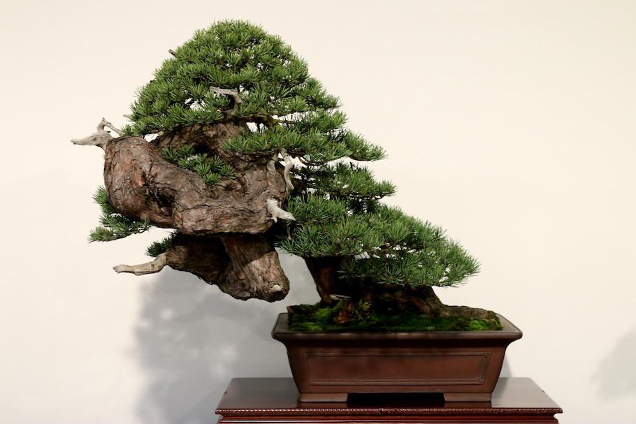 Noelanders trophy 2018 bonsai empire for Unusual bonsai creations