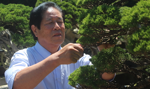 Masahiko Kimura creates a Bonsai