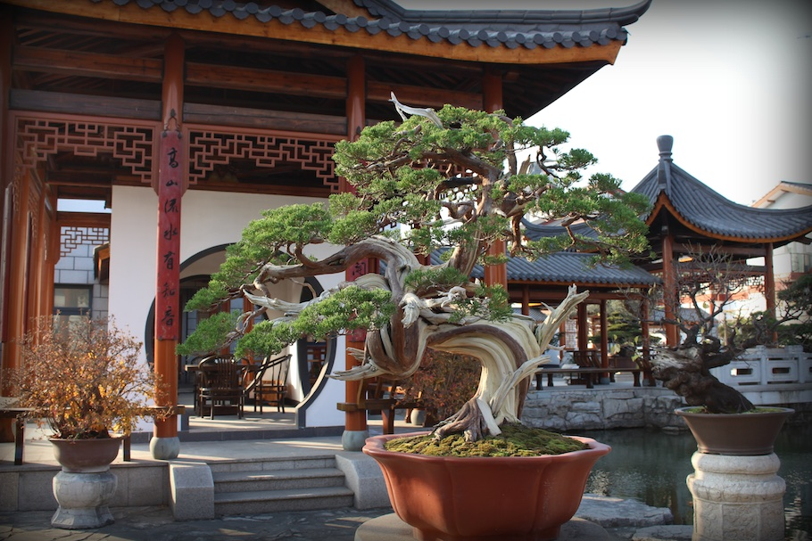 Penjing garden qingyi yuan bonsai empire for Unusual bonsai creations