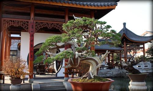 Penjing garden Qingyi Yuan
