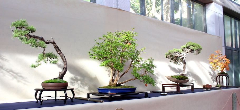 Sakka ten autumn Bonsai