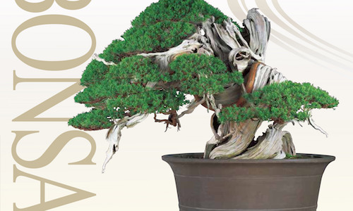 20th Anniversary Bonsai Empire