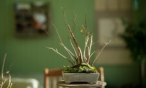 DIY: Shohin Bonsai forest