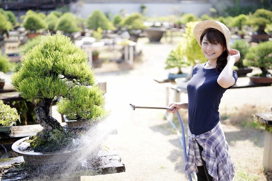 Tomomi Mori Bonsai artist