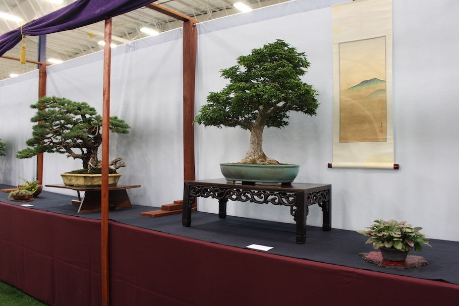 US National Bonsai Exhibition 2018