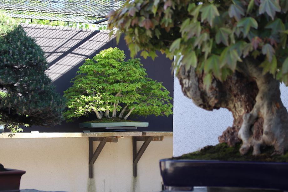 Luis vallejo 39 s garden bonsai empire for Landscaping rocks vallejo ca