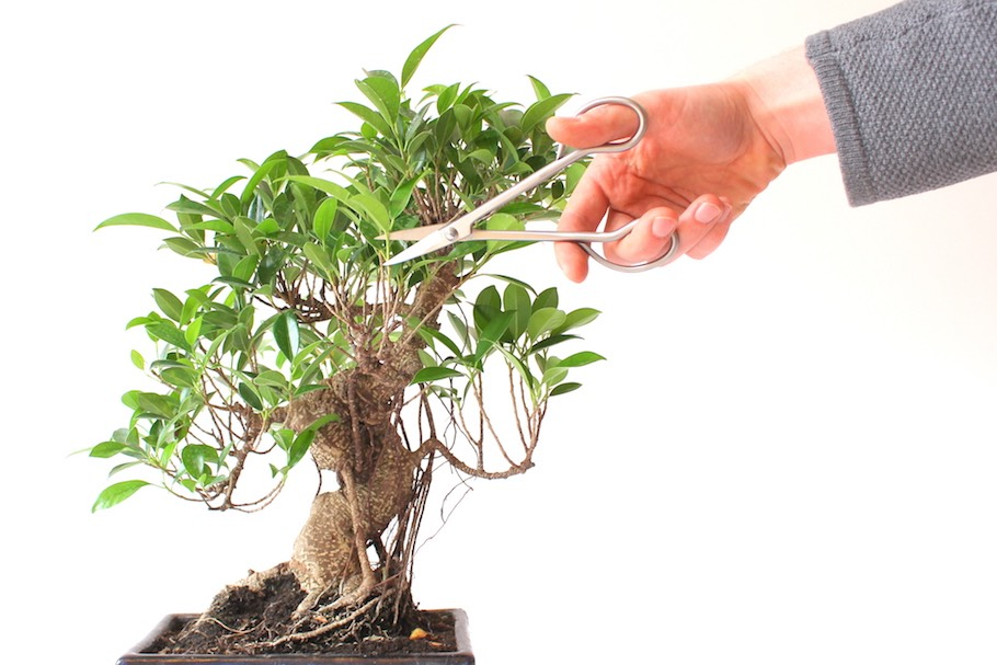 Pruning Bonsai, cutting branches to shape the tree