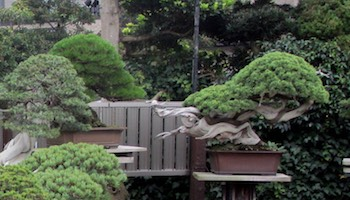 Japanese gardens and Bonsai in Japan Bonsai Empire
