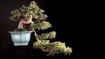 Our top 10 39 s bonsai empire for Unusual bonsai creations