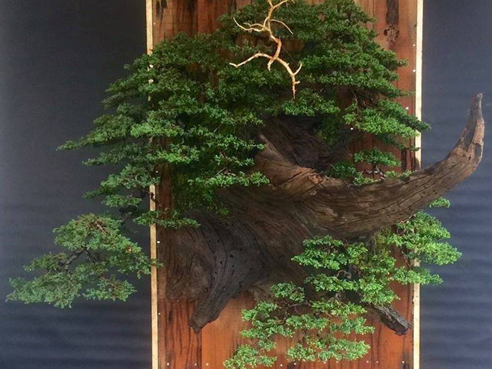 Bonsai at Namaste Bonsai event