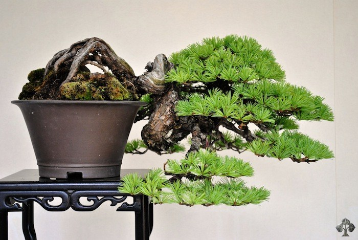 Bjorn Bjorholm Bonsai Empire