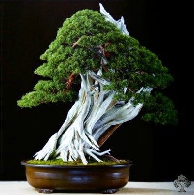 Marco Invernizzi Bonsai Empire