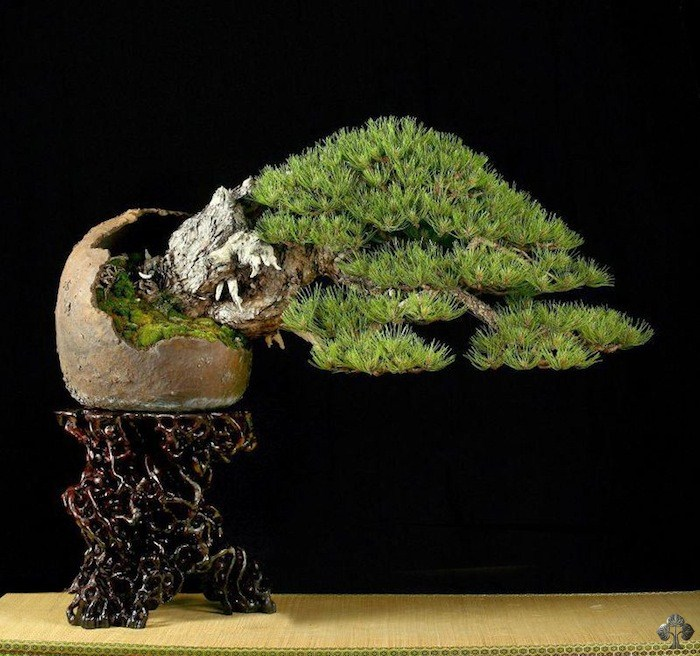 UBI bonsai