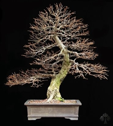 Michael Persiano Bonsai