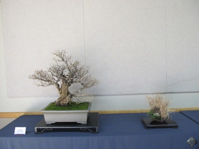 Bonsai forest by Robert Pressler