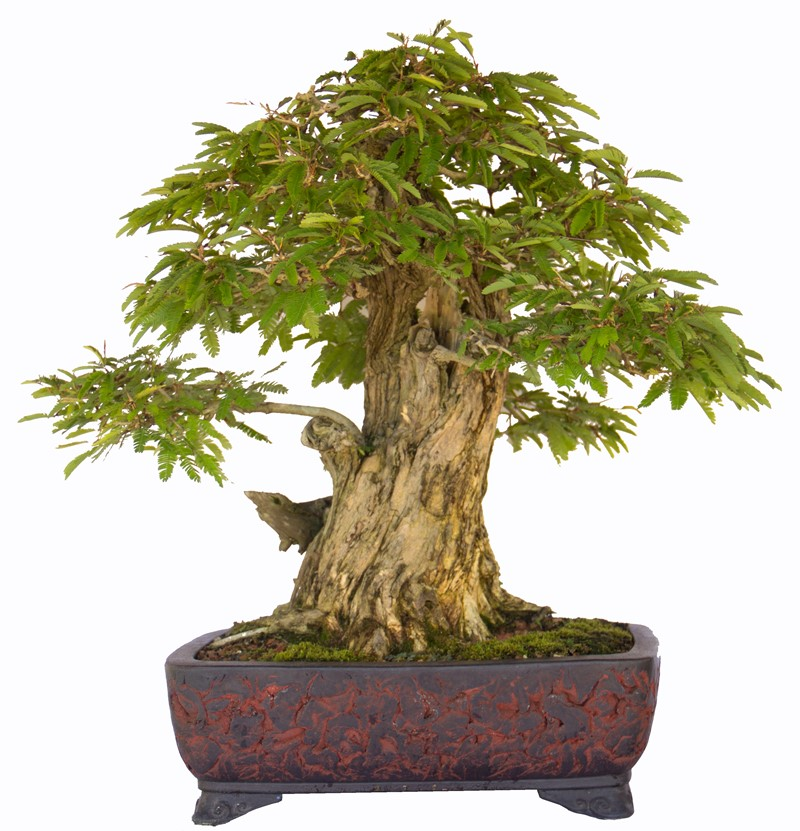 Bonsai rock tree