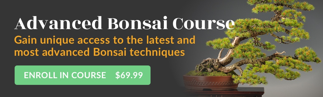 Advanced Bonsai Course
