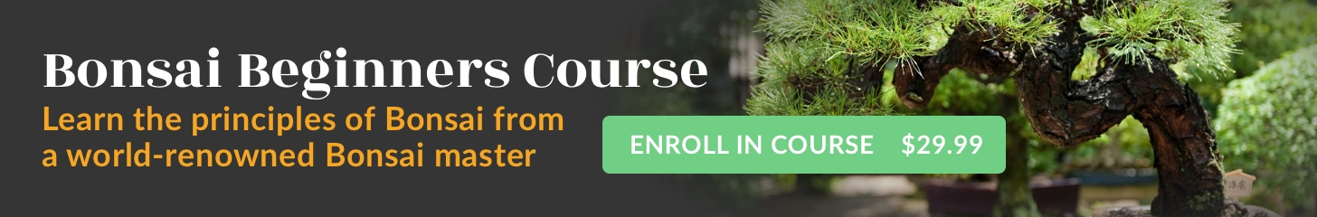 Bonsai Beginners Course