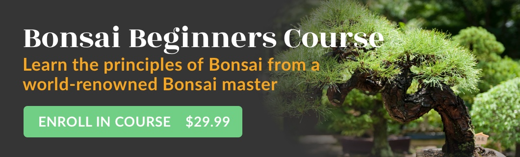Bonsai Beginners Course