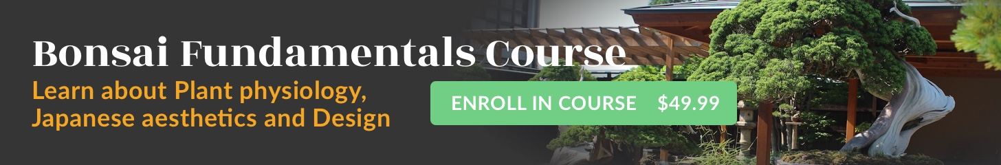 Bonsai Fundamentals Course